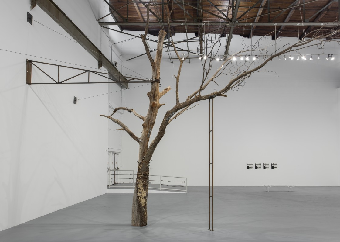 Zoe Leonard Installation View 01
