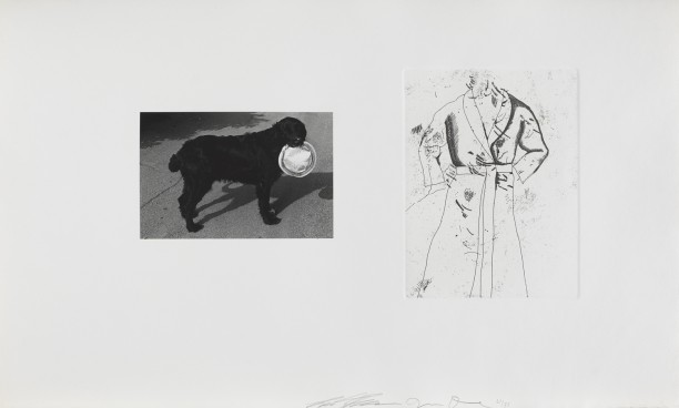 Untitled (dog and robe)