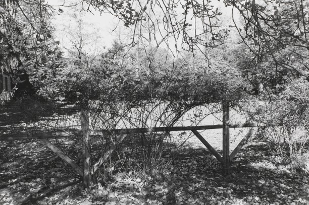 Untitled, West Orange, New Jersey (Wood Fence with Branches)