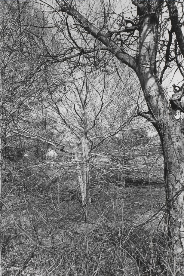 Untitled, New City, New York (Branches)