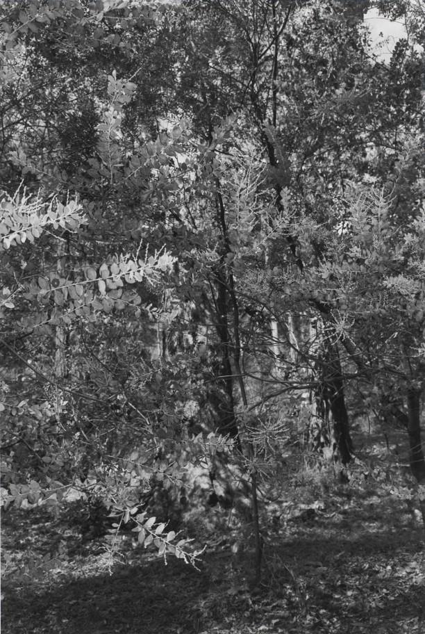 Untitled, Brisbane, Australia (Leaves)