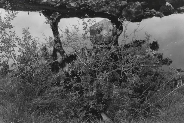 Untitled, Aynshire, Scotland (Bush, Rock, and Stream)