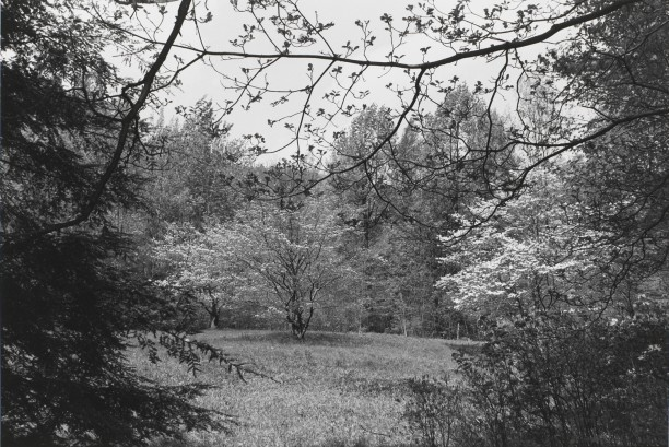 Untitled, New City, New York (Forest Clearing with Tree)