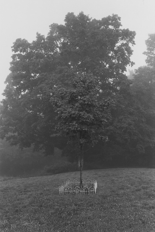 Untitled, East Chatham, New York (Solitary Tree)