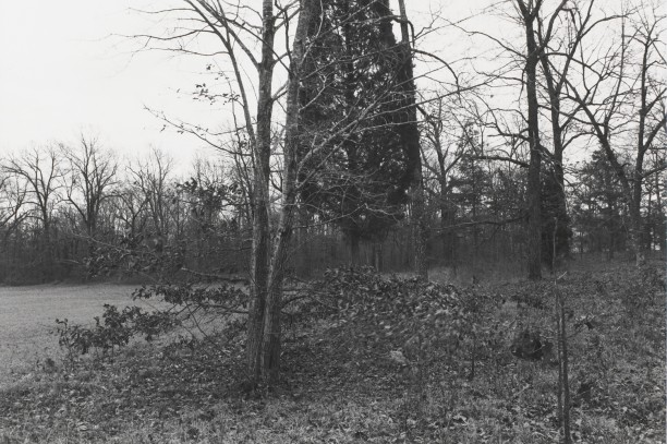 Untitled from Shiloh National Military Park, Tenessee (moving leaves)