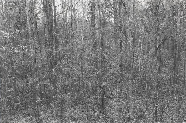 Untitled from Shiloh National Military Park, Tenessee (leaves, trucks and branches)