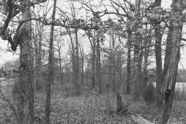 Untitled from Shiloh National Military Park, Tenessee (blowing leaves)