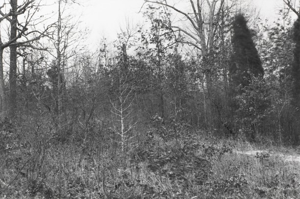Untitled from Shiloh National Military Park, Tenessee (forest with small dirt road)