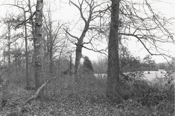 Untitled from Shiloh National Military Park, Tenessee (forest with view of clearing)