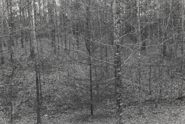 Untitled from Shiloh National Military Park, Tenessee (trees/branches)