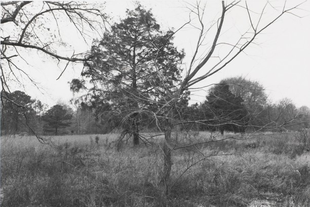 Untitled from Shiloh National Military Park, Tenessee (branches)