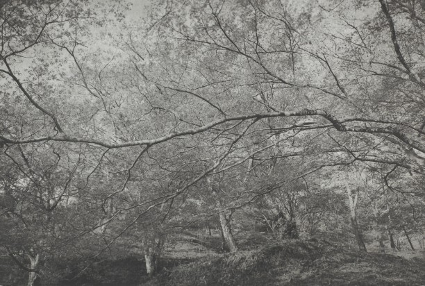 Yoshimo (horizontal branch(es))