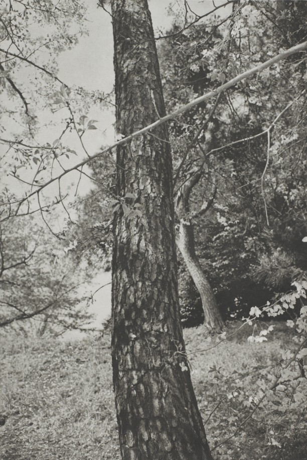 Tokyo (tree trunk close-up)