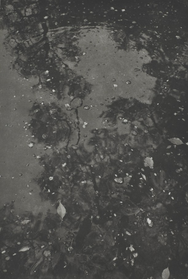 Kyoto (leaves and shadows on surface of water)