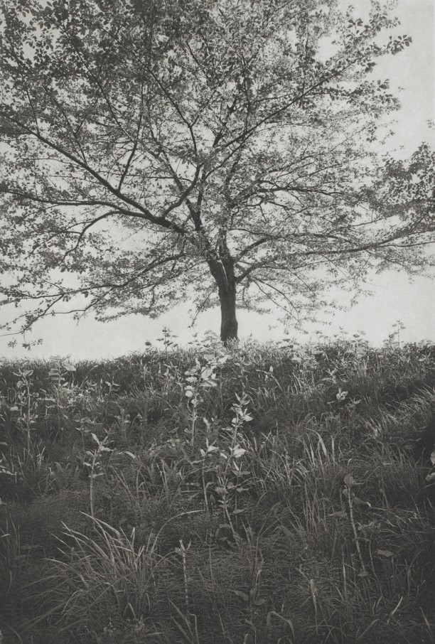 Tokyo (lone tree with tall grass)