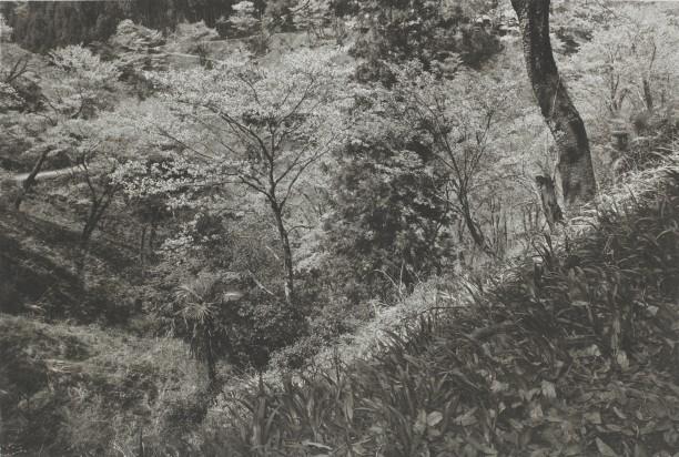 Yoshimo (meadows)