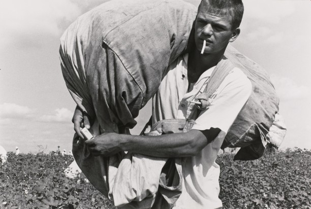 Cotton picker; ten year, robbery and assault