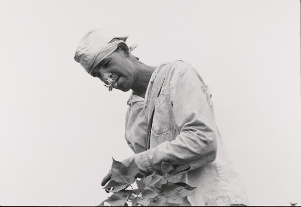 Cotton picker; life sentence, robbery