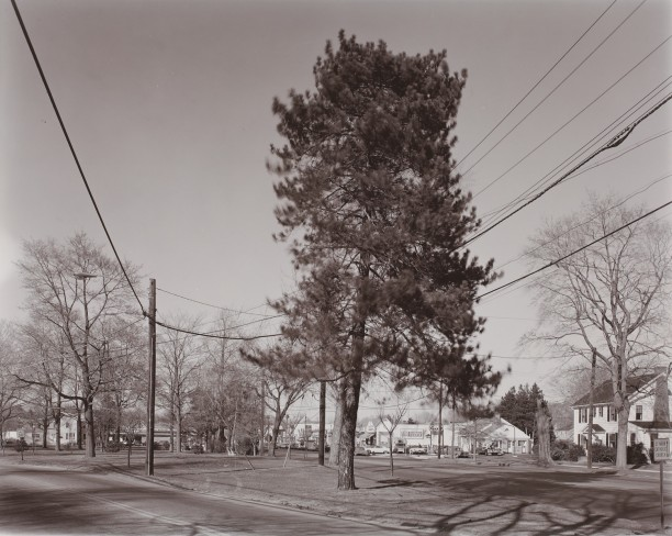 Tree, Stratford, Conneticut