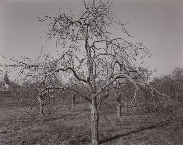 Poultneyville Orchard