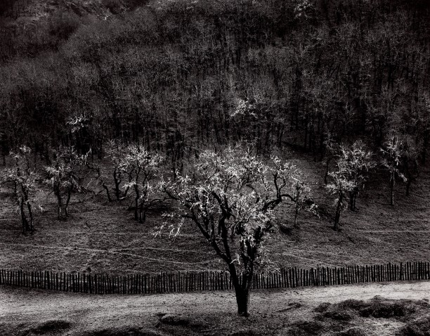 Oaktree, Rain, Sonoma County, California