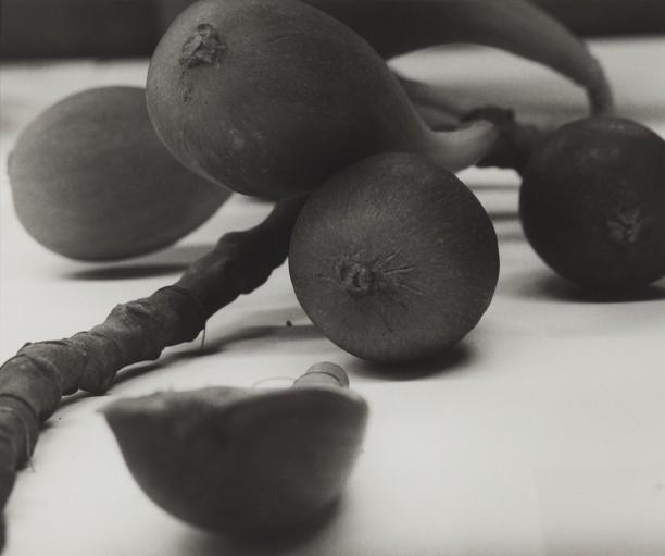 Lebanon, 1989Blaschka Model 770, 1906 Genus no. 1961 Family, Moraceae Ficus Carica Linn. The Fig