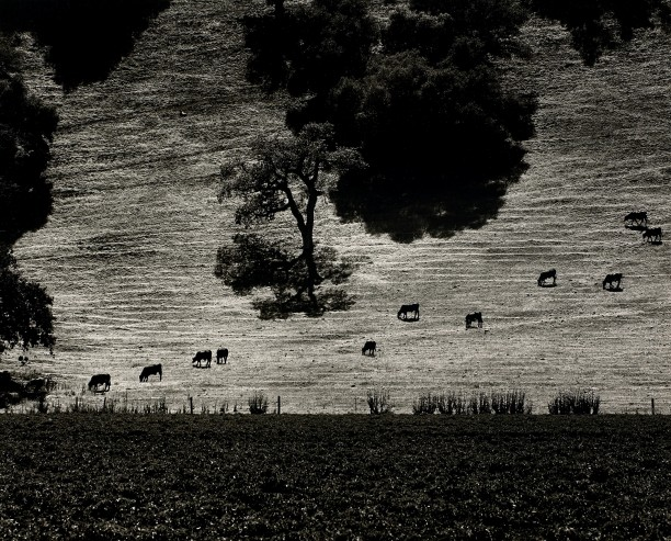 Cattle Paths