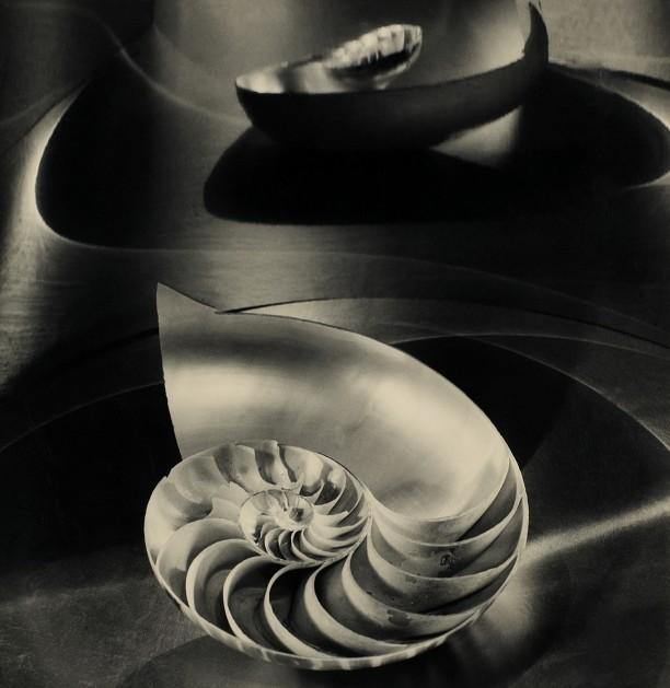 Halfred Nautilus